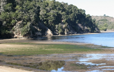 Shell Beach, Tomales Bay State Park