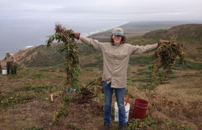 Point Reyes Volunteering