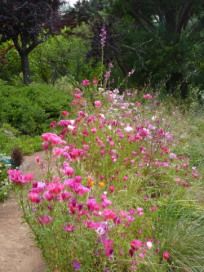 Cnps Marin Native Garden Photo Gallery